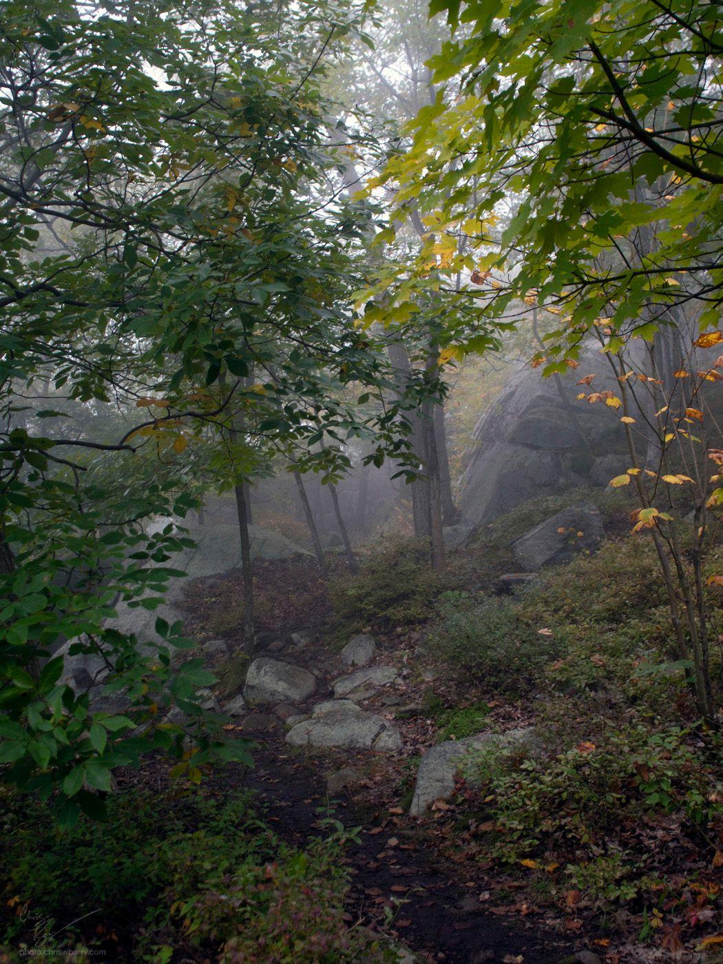 10-06-18: Foggy Trail