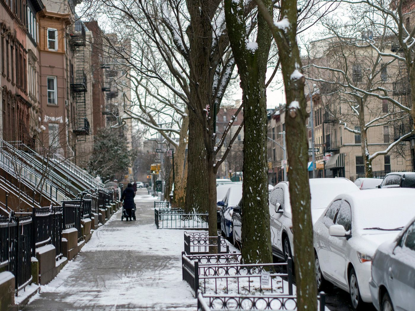 3-1-19: Snow Covered