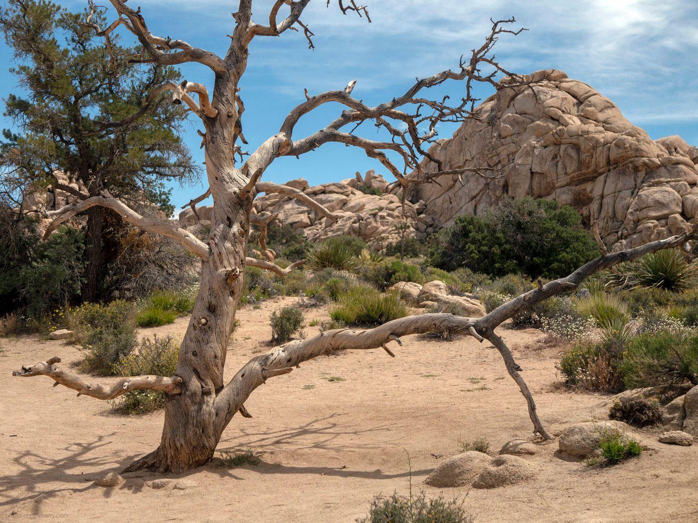 4-28-19: Long Dead Tree
