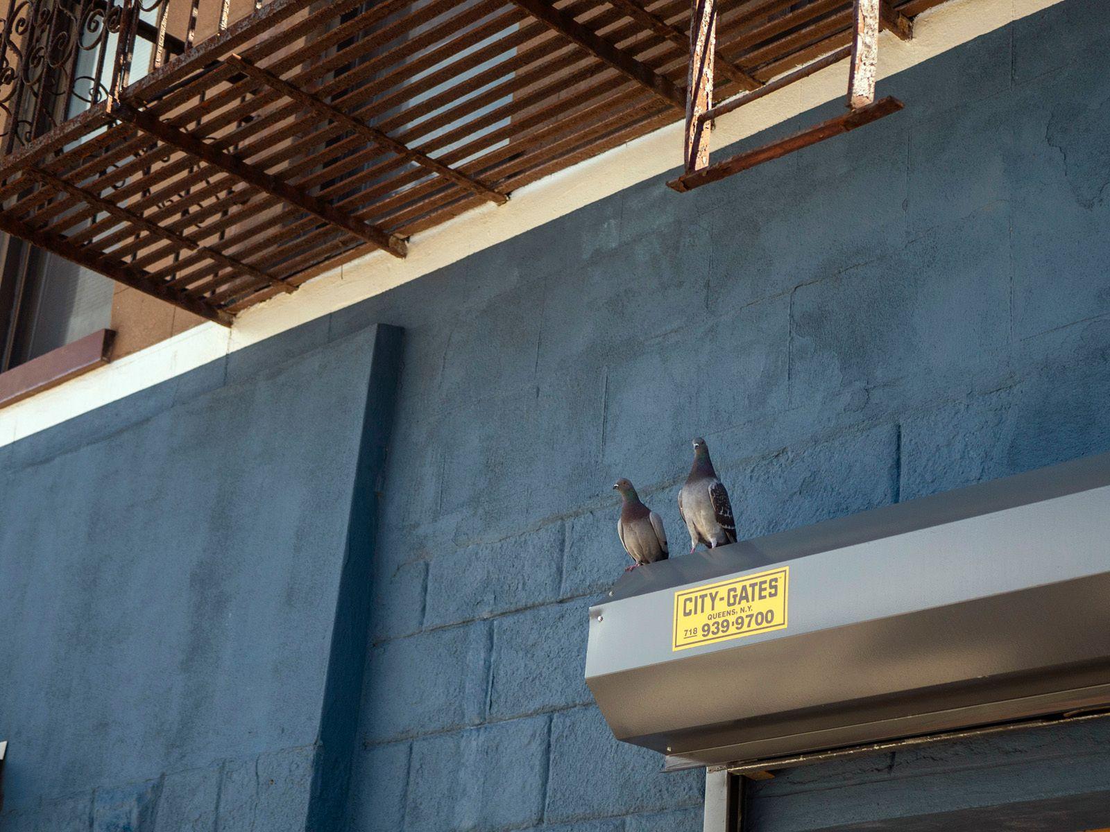 Pigeon Friends