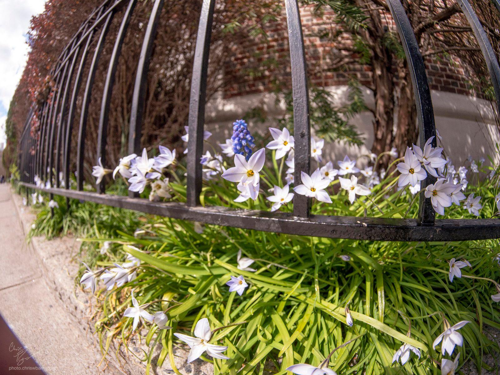 4-4-2020: Purple Flowers