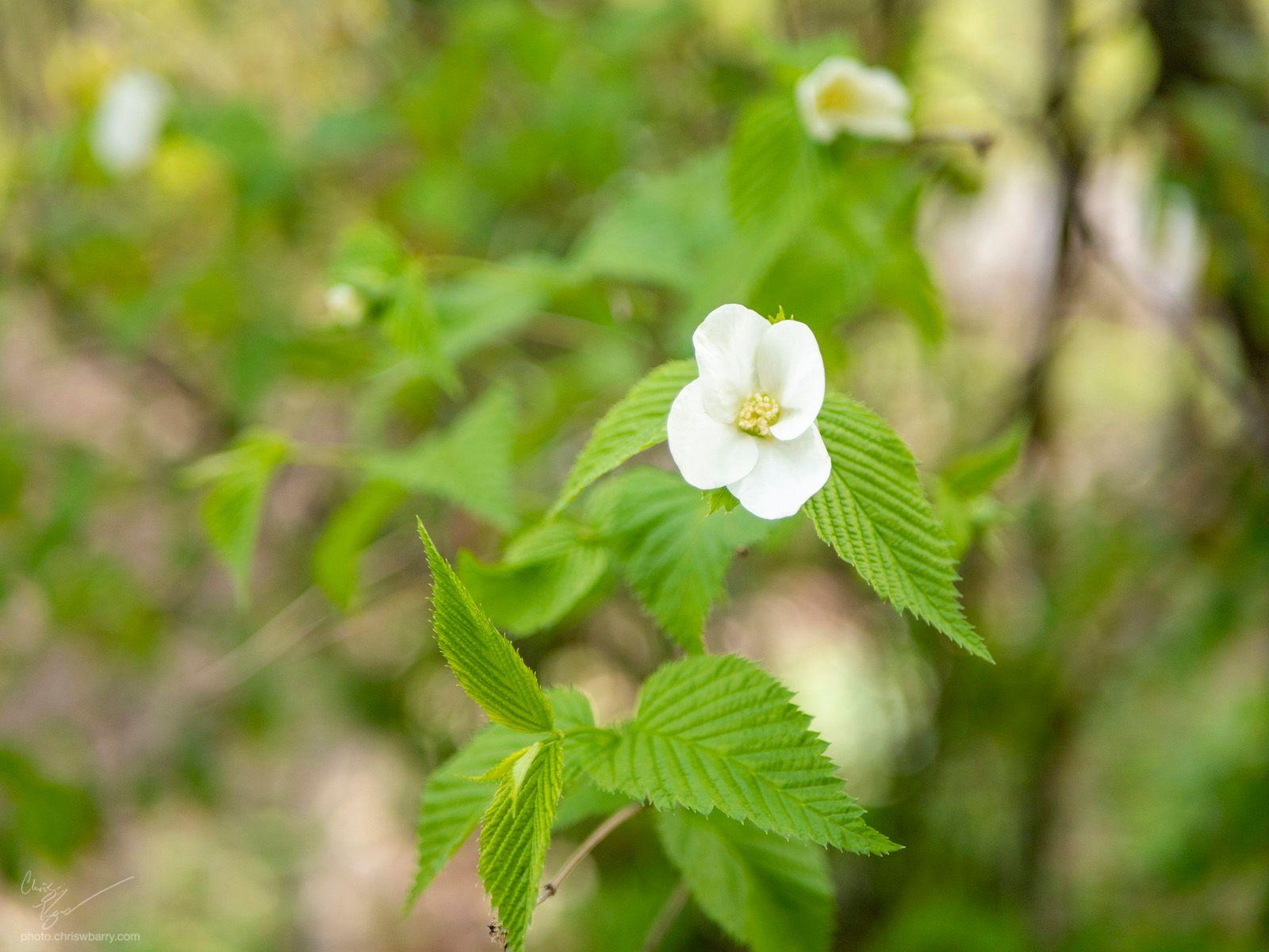 4-19-20: Flowering Tree