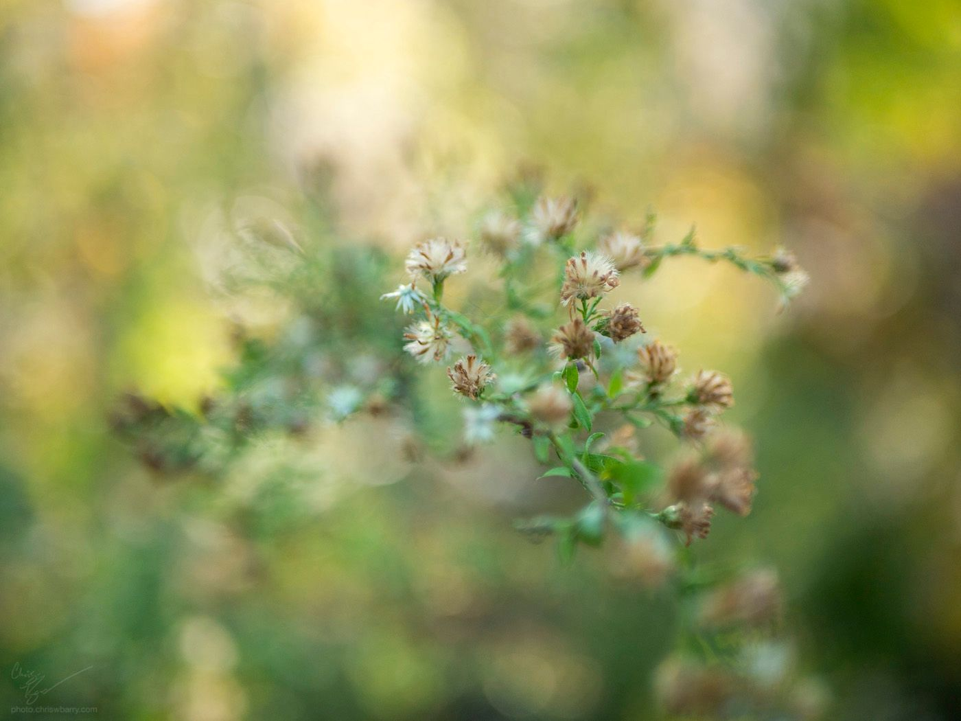 11-04-2020: Fluffy Seeds
